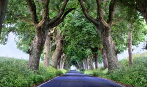 trees that merge at top illustrate Houston mergers & acquisitions advisory